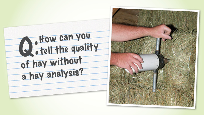 Thumbnail for How can you tell the quality of hay without a hay analysis?