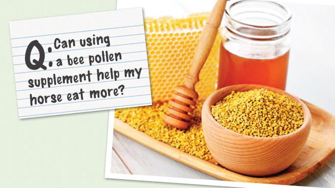 Thumbnail for Can Bee Pollen Help my Horse Eat More?