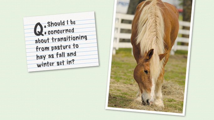 Thumbnail for Transitioning From Pasture to Hay