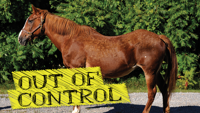 Thumbnail for Hormonal Imbalances in Horses