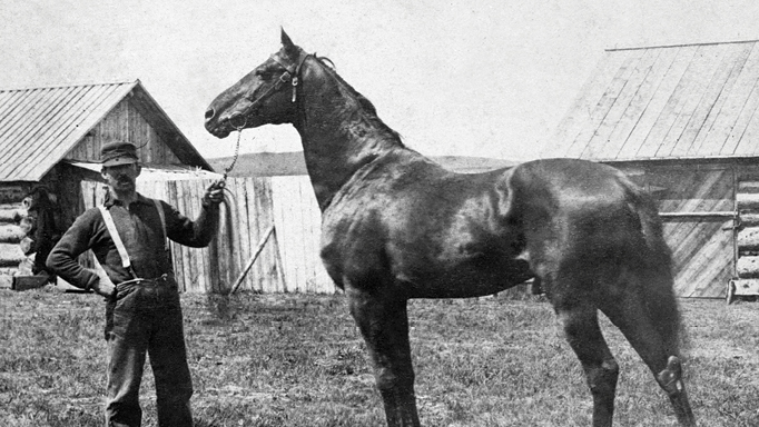 Thumbnail for The Early Days of the Thoroughbred in Southern Alberta