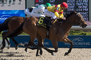 Jockey Eurico Da Silva guides Blurricane to victory in the $125,000 Ballade Stakes at Woodbine. Photo by Michael Burns