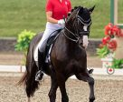 Alexandra Meghji of Toronto, ON led the Ontario/Alberta Team to a fourth place finish in the Young Rider Team Competition on the opening day of dressage at the 2017 Adequan/FEI North American Junior & Young Rider Championships (NAJYRC) in Saugerties, NY. Riding Rigo, owned by Diana Belevsky, she placed fifth on the individual leaderboard. Photo by Cealy Tetley