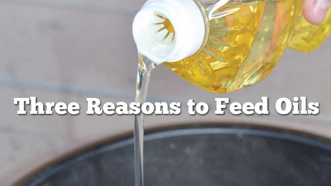 Thumbnail for Three Reasons to Feed Oils