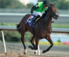 Moonlit Promise claimed the $100,000 Sweet Briar Too Stakes ta Woodbine. Photo by Michael Burns