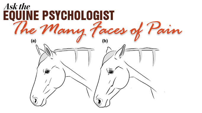 Thumbnail for How to Tell if Your Horse is in Pain