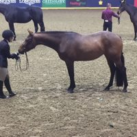 Hunter Prospect For Sale