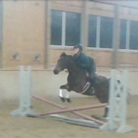 Large Pony Hunter Prospect for sale