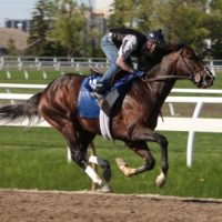 Exercise Rider needed for Thoroughbreds